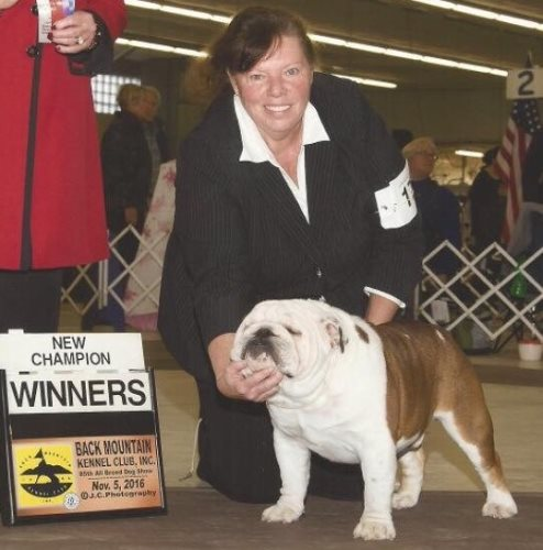 Bulldog Stud BISS GCH Saint Augustine of Brides @ DiNels a Champion Bulldog Stud