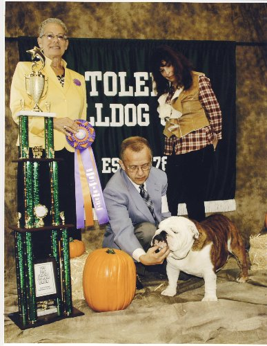 Bulldog Stud GCH. CHEROKEE ORIGIN JUST JOHNNY a Champion Bulldog Stud