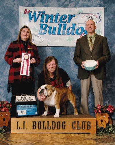 Bulldog Stud GCH Glendar's Guardian of the Galaxy a Champion Bulldog Stud