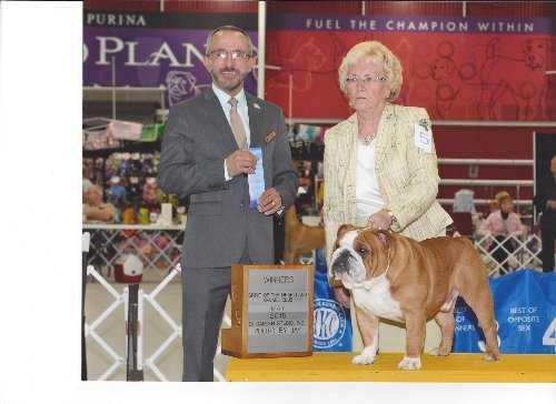 Rosborough Bulldogs Bulldog Breeder Owner Granite City Il