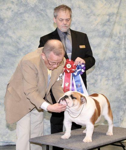 Reputable Dog Breeders - Show Videos Pedigrees Champions Studs
